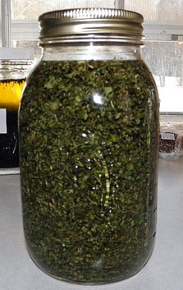 Herbal mouth rinse soaking in herb