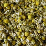 Chamomile, dried for tea