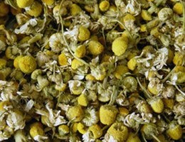 The Healing Benefits of Chamomile
