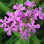 Herbal Encyclopedia
