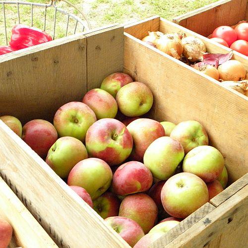 Pectin apples