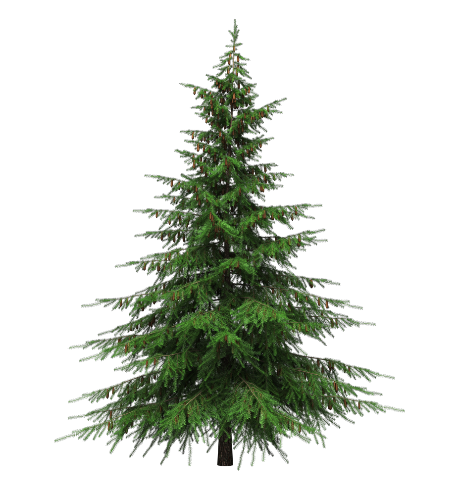 Healing Benefits Of Your Christmas Tree Cloverleaf Farm