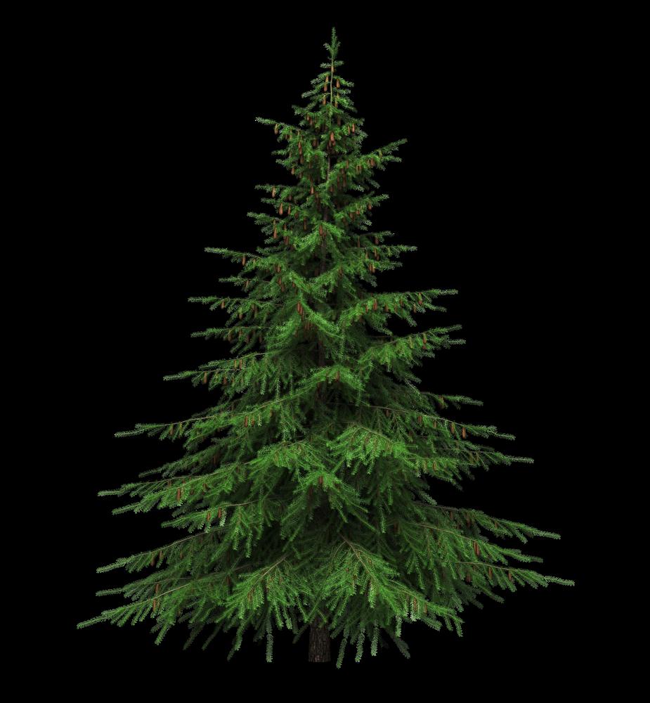Healing Benefits Of Your Christmas Tree