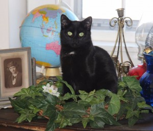World wide kitty